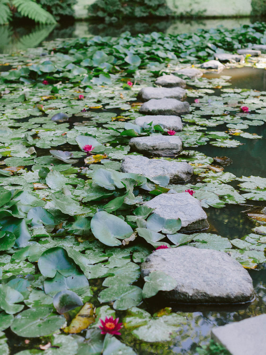lake with step stones and water lilies in the Azores by Portugal Wedding Photographer
