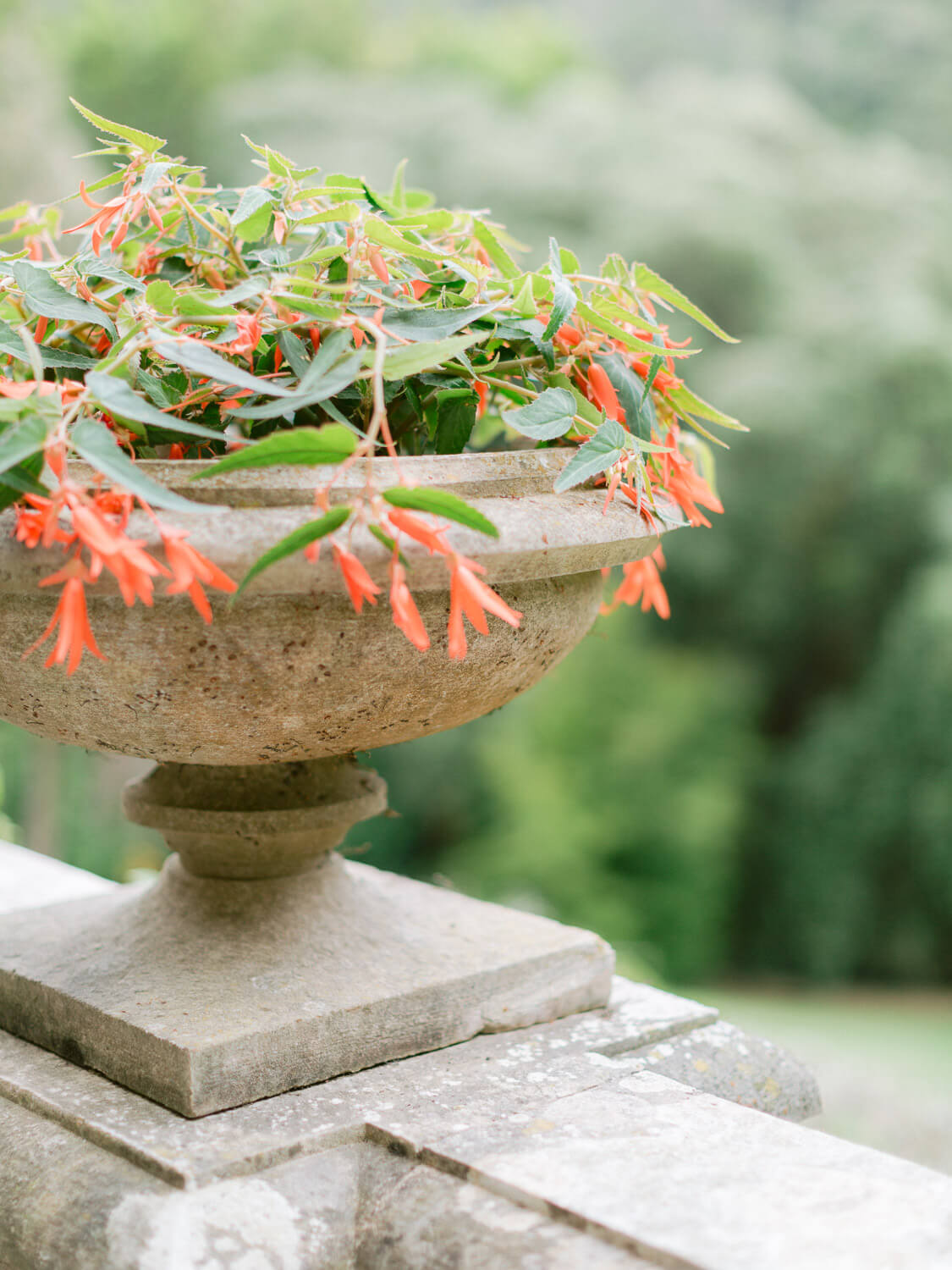 Monserrate Palace in Sintra detail of a balcony stone vase with red flowers by Portugal Wedding Photographer
