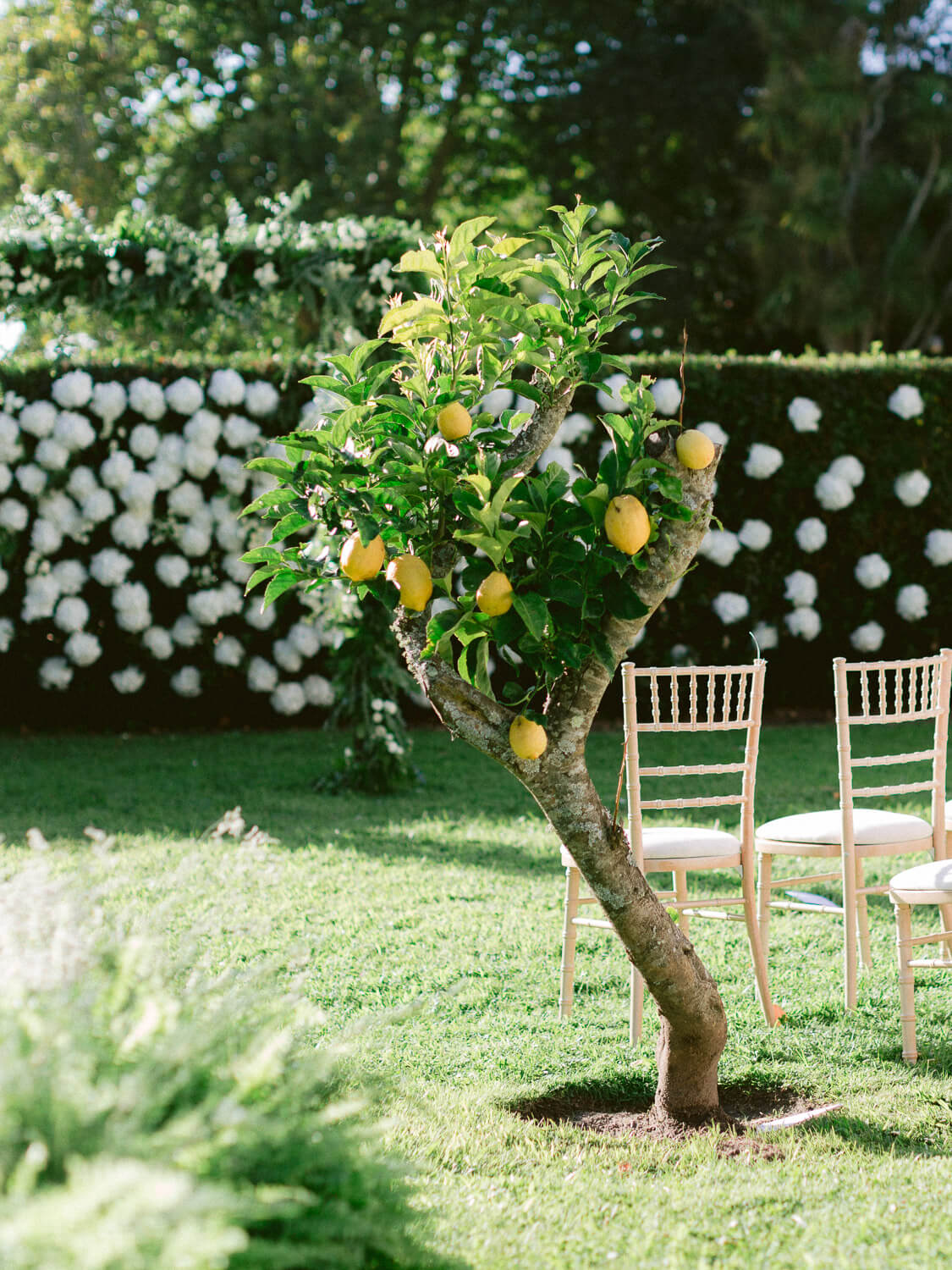 lemon tree for wedding ceremony setting in Seteais Palace Sintra by Portugal Wedding Photographer